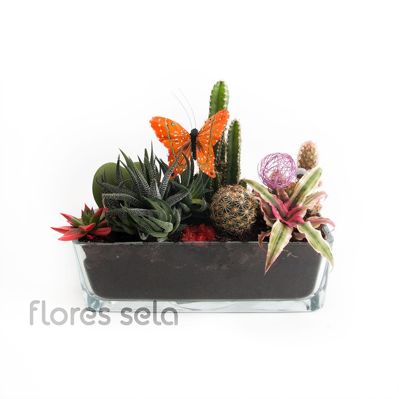 Centro Cactus 45e Copia